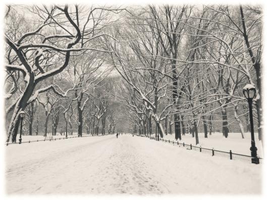Invierno en Central Park 2