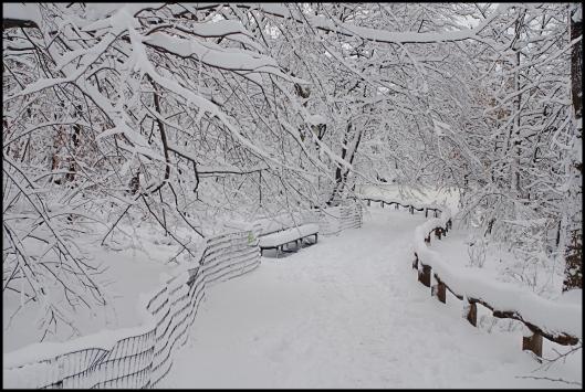 Central Park después de Nemo08