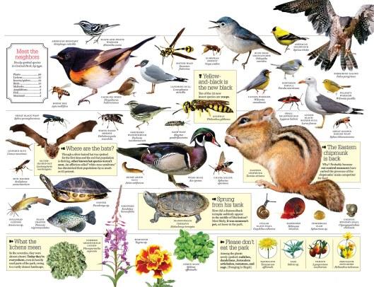Nuevas especies descubiertas en el parque durante el último censo (Central Park Conservancy)
