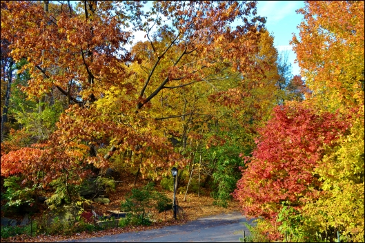 Central Park otoño004