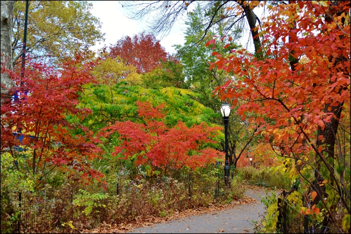 Central Park otoño006