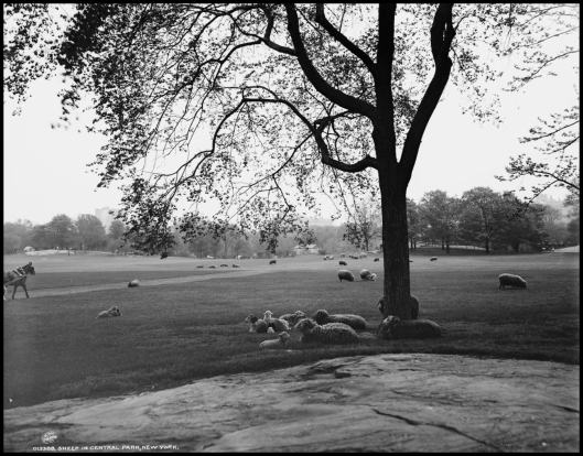 Sheep Meadow (1902)