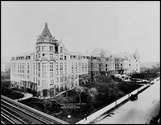 American Museum of Natural History (1913)