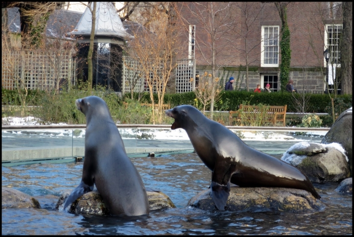 Central Park zoo 2