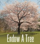 endow-tree
