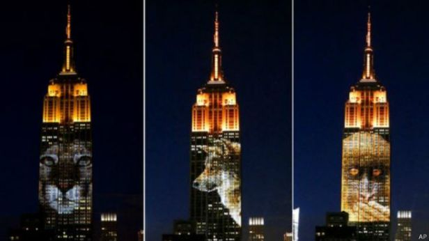 empire_state_animales_extincion